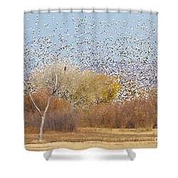 Shower Curtain featuring the photograph Watching Over The Flock by Bryan Keil