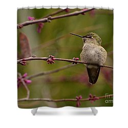 Watching Spring Arrive Shower Curtain
