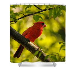 Watching The Sun Set Shower Curtain by Lois Bryan