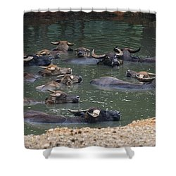 Water Buffalo Shower Curtain