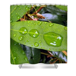 Water Droplets On Leaf Shower Curtain