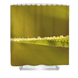 Water Drops On A Leaf Shower Curtain by Peggy Collins