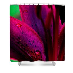Water-drops On The Petal Shower Curtain by Shelby  Young