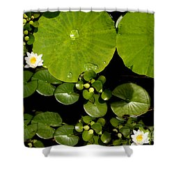 Water Drops Bristol Rhode Island Shower Curtain by Tom Prendergast