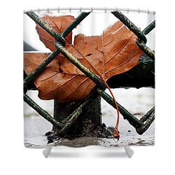 Water Leaf Shower Curtain by Mark Ashkenazi