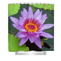 Water Lilies 005 Shower Curtain
