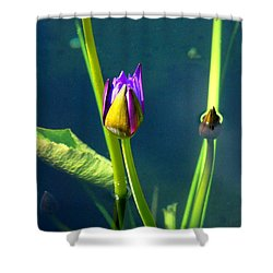 Water Lily 005 Shower Curtain
