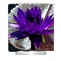 Water Lily 008 Shower Curtain