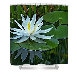 Water Lily And Reflection Shower Curtain