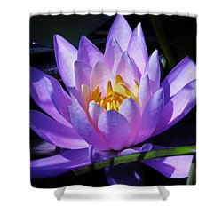 Water Lily Blues Shower Curtain by Sherman Perry