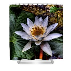 Water Lily Shower Curtain by David Patterson