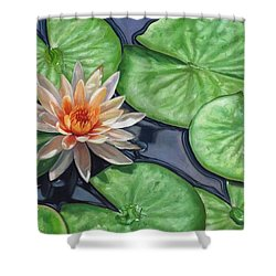 Water Lily Shower Curtain by David Stribbling