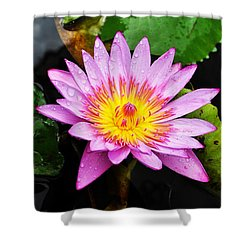 Water Lily Shower Curtain by Denise Bird