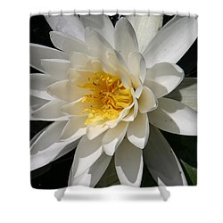 Shower Curtain featuring the photograph Water Lily  by Denyse Duhaime