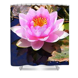 Water Lily In Pink Shower Curtain