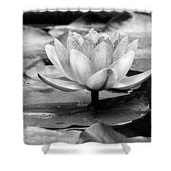 Shower Curtain featuring the photograph Water Lily by Michelle Joseph-Long