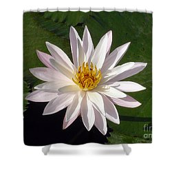Water Lily Shower Curtain by Sergey Lukashin