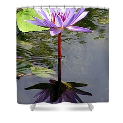 Water Lily - Shaded Shower Curtain by Pamela Critchlow