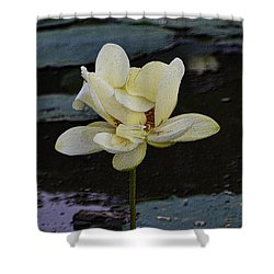 Shower Curtain featuring the photograph Water Lily Unfolding by Nadalyn Larsen