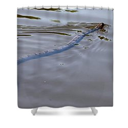 water Moccasin  Shower Curtain by Debra Forand