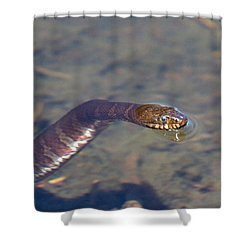 Water Snake Shower Curtain by Karol Livote