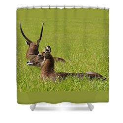 Waterbuck Antelope Shower Curtain