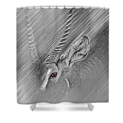 Waterbuck Shower Curtain