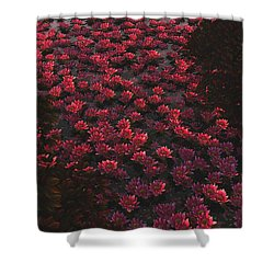 Waterlilies 2 Shower Curtain
