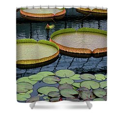 Waterlilies And Platters 2 Shower Curtain
