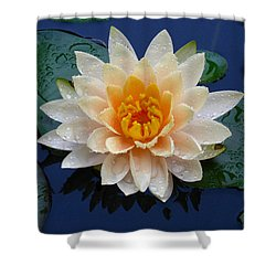 Waterlily After A Shower Shower Curtain by Raymond Salani III