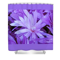 Waterlily Crocus Shower Curtain by Michele Penner