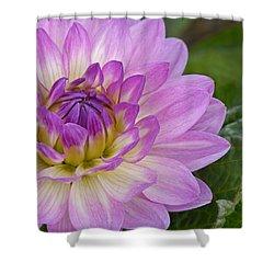 Waterlily Dahlia Shower Curtain