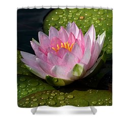 Watery Lily Shower Curtain by Doug Norkum