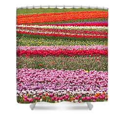 Waves Of Tulips Shower Curtain by Sabine Edrissi