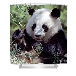 Waving The Bamboo Flag Shower Curtain by Liz Leyden