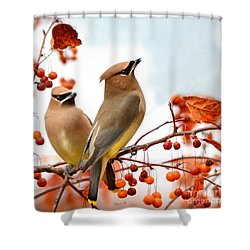 Beautiful Waxwing  Shower Curtain