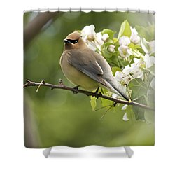 Waxwing In A Dream Shower Curtain