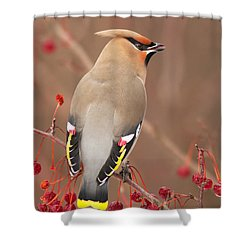 Waxwing In Winter Shower Curtain by Mircea Costina Photography