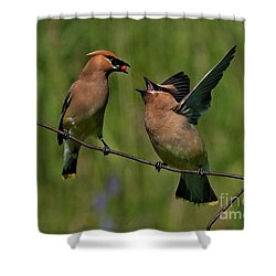 Waxwing Love.. Shower Curtain by Nina Stavlund