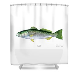 Weakfish Shower Curtain