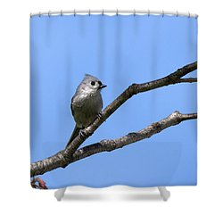 Weary Wings Shower Curtain by Christina Rollo