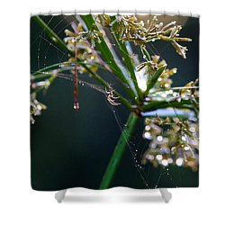 Web After The Rain Shower Curtain by Adria Trail