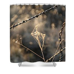 Shower Curtain featuring the photograph web by David S Reynolds