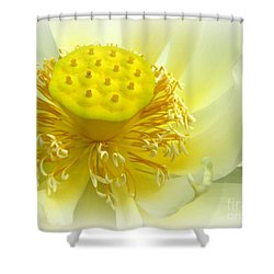 Tranquil Beginnings Shower Curtain