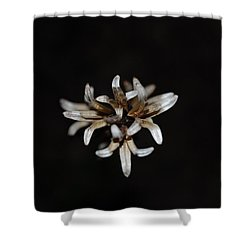 Shower Curtain featuring the photograph Weed On Black by Mim White