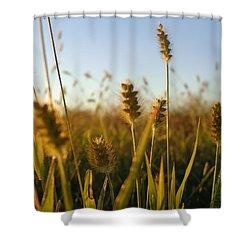 Shower Curtain featuring the photograph Weeds by Joseph Skompski