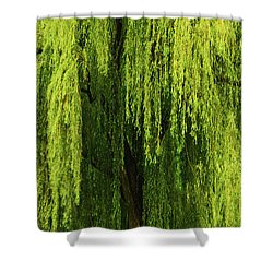 Weeping Willow Tree Enchantment  Shower Curtain by Carol F Austin