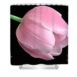 Welcome Spring In Pink Shower Curtain