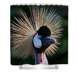 West African Crowned Crane Shower Curtain
