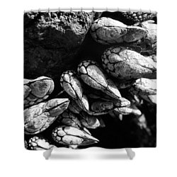 Shower Curtain featuring the photograph West Coast Delicacy by Cheryl Hoyle